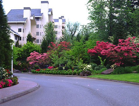 Expert Landscaping Services in New Rochelle NY